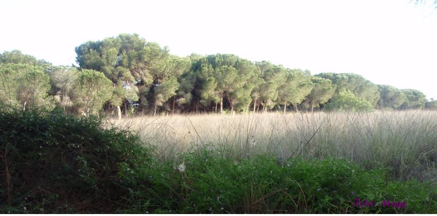 paraje natural paisaje
